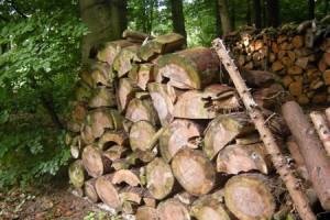 Brennholz im Wald auf einem Stapel