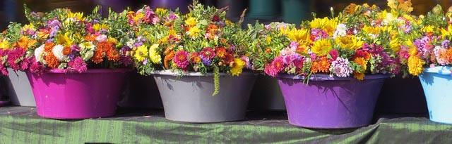 Vier bunte Blumentöpfe