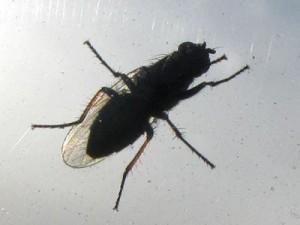 insektenschmutz