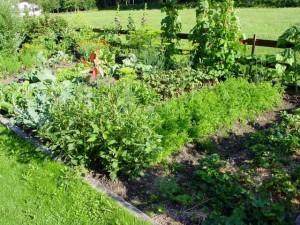 Pflanzen und Gemüse im Bauerngarten