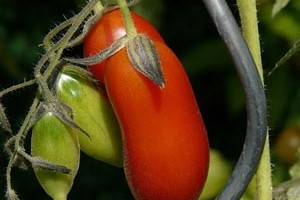 Tomaten Rankhilfe Spirale